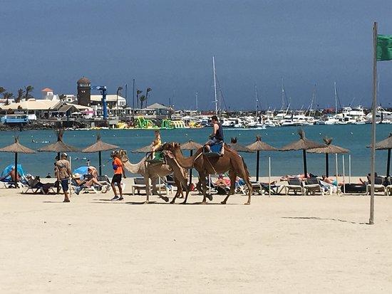 Fuerteventura, Spain: Beach