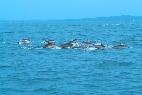 Trinco Blue Whale Watching & Diving: Spiner Dolpins