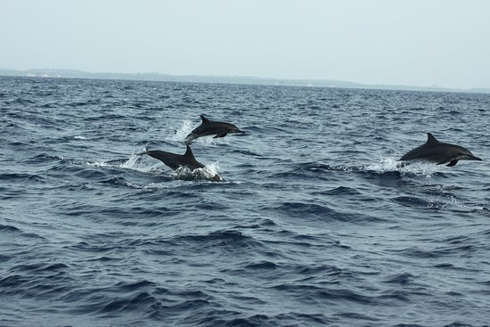 Trinco Blue Whale Watching & Diving: Spiners