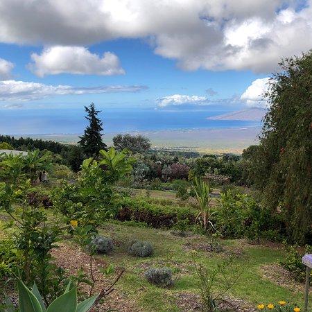 Ali'i Kula Lavender Farm ภาพถ่าย