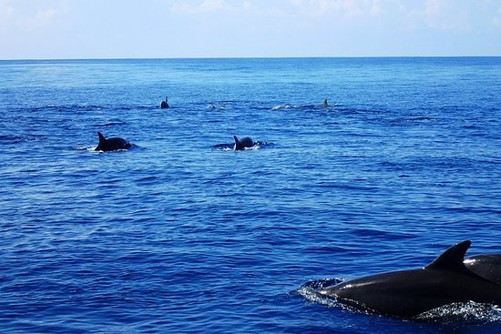 Tour en barco privado Seafari Ocean...