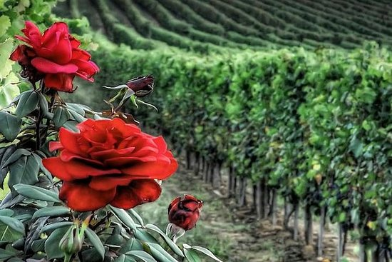 Private Tour to Siena and Montalcino...