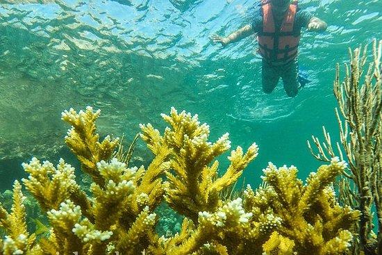 Isla Mujeres的当地钓鱼和浮潜之旅