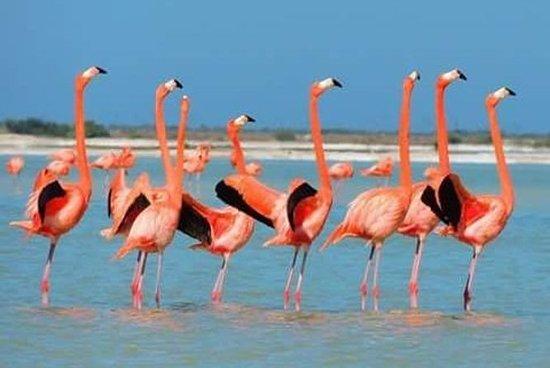 Tour privado: flamencos rosados...