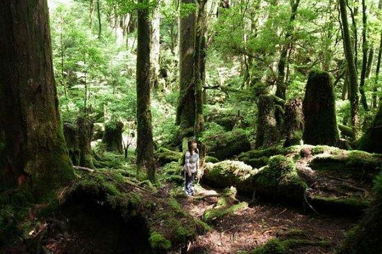 Passeio a pé na ilha de Yakushima