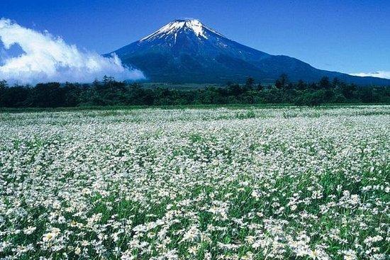 Mt. Tour in taxi di cinque laghi Fuji