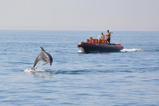 Delfini e grotte tour noleggio privato