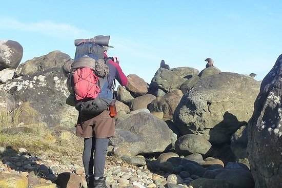 Heli Hike Walking mit Pinguinen und...
