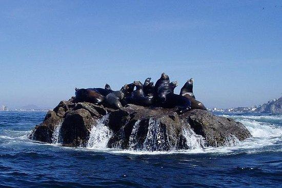 海湾观光,海岸鸟类和浮潜 - 私人超级庞加(中控台)