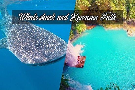 Whale Shark Watching & Tumalog Falls...