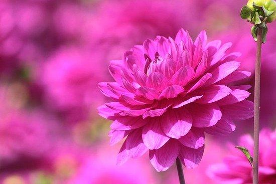 Expérience de fleur ultime