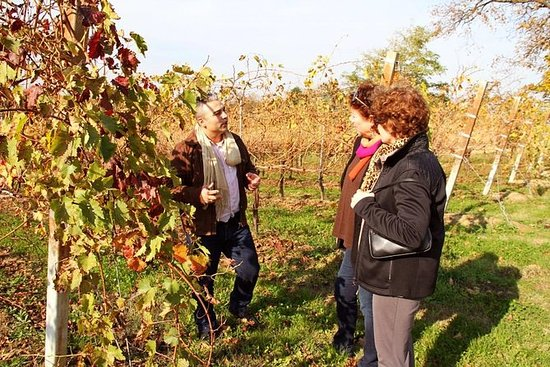 Organic Wine & Shopping tour from...
