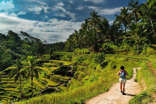 Kintamani Tour: Tegalalang ris ...