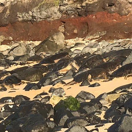 Green sea turtles watching