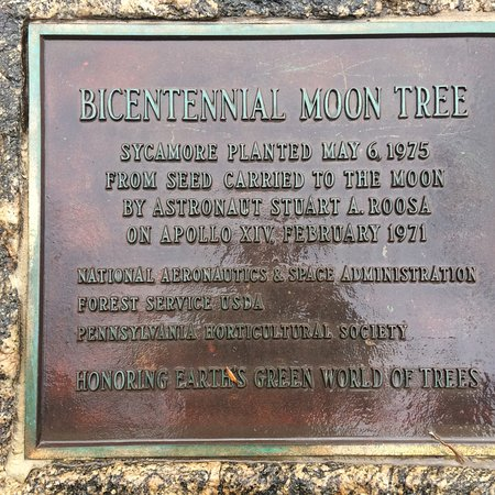 Bicentennial Moon Tree, Independence National Historical Park