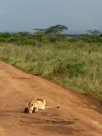 Фотография Day Tour: Giraffe Center, Elephant Orphanage and Nairobi National Park