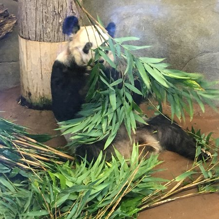 Memphis Zoo 2019 What To Know Before You Go With Photos