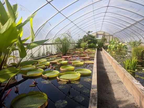 Hughes Water Gardens