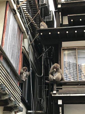 Unique onsen experience, excellent staff