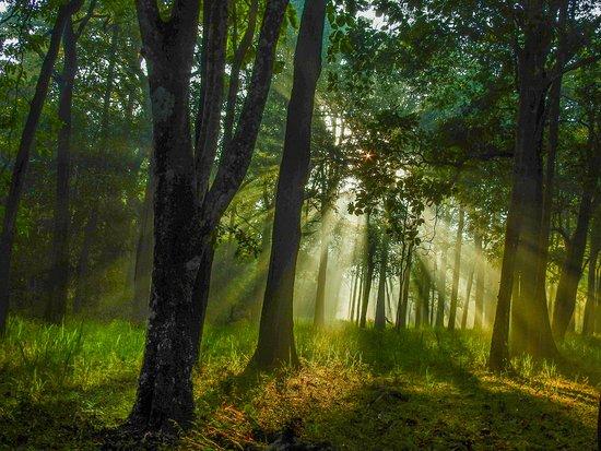 Early morning id Bhadra