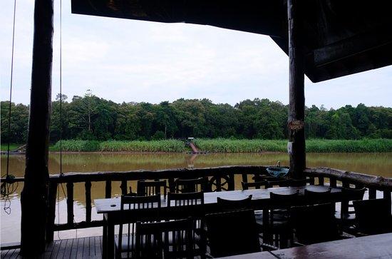 Bilde fra Kota Kinabatangan