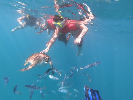 Breezing Watersports Barbados Snorkeling Tours Picture
