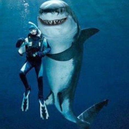 Maui Diving - Scuba & Snorkel Center (Lahaina) - 2019 All ...