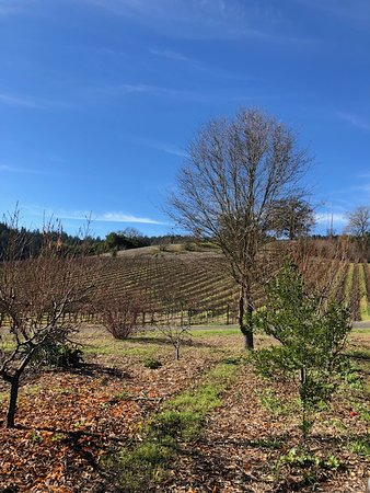 5be5dca86de Porter Creek Vineyards (Healdsburg) - 2019 All You Need to Know ...