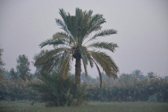 Kut, עיראק: سدة الكوت