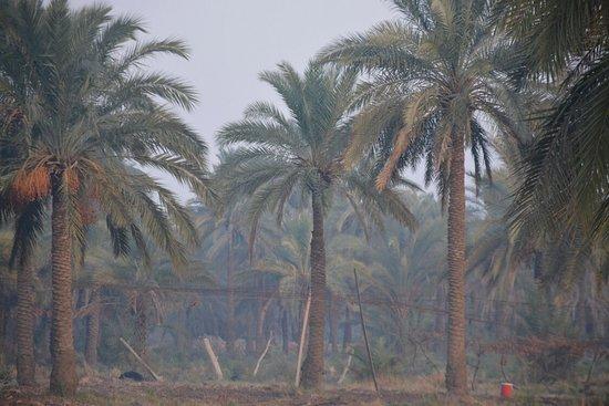 Kut, עיראק: الكوت -تصويري سجاد هازارد