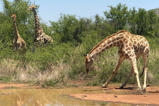 Pilanesberg Safari Day Trip from...