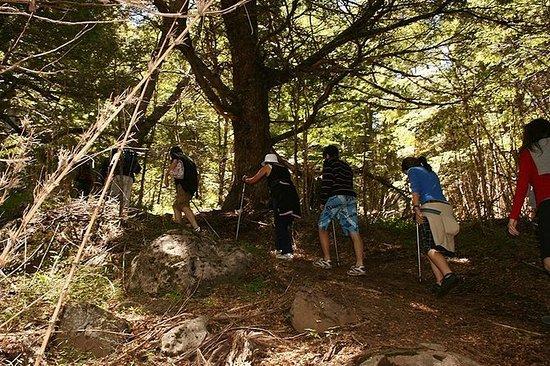 Cerro Colorado Trekking Tour from San...