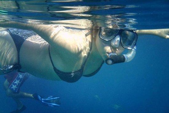 Excursão de mergulho com snorkel em...