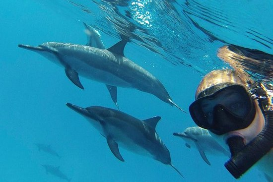 Wild Dolphin And Reef Snorkel