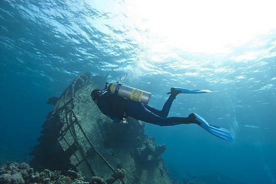 Sud Aruba 2-Tank Dive Experience