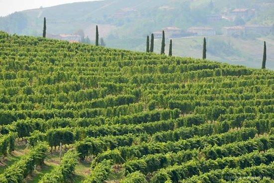 Barolo vin tur