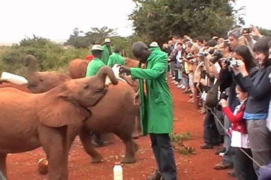 Half-Day Baby Elephant Orphanage and...