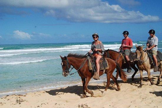2-Hour Horseback Riding Adventure from Punta Cana