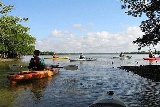 Happy Hour Kayak Tour à Sarasota