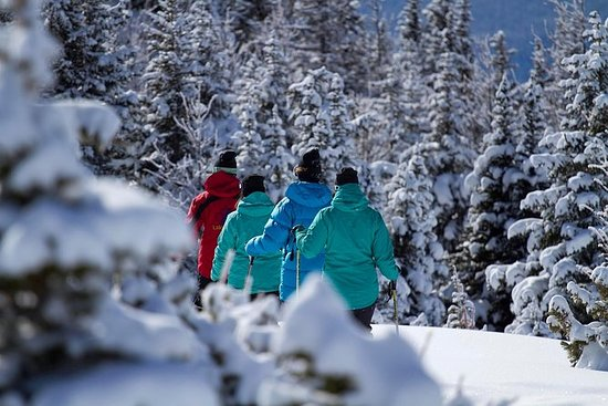 路易斯湖冬季野生动物雪鞋之旅