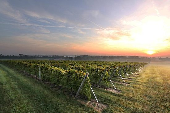 Privat tur: Mendoza Vin med sjåfør og...
