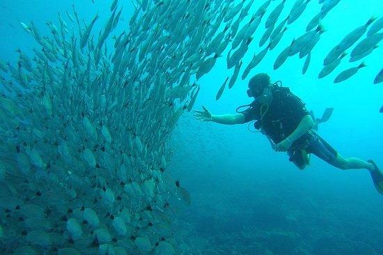 Scuba Diving at Playa Hermosa, Coco...