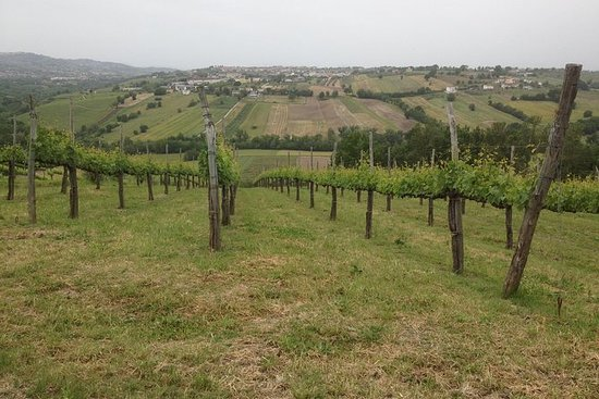 Full-Day Wine Tasting Tour in the...