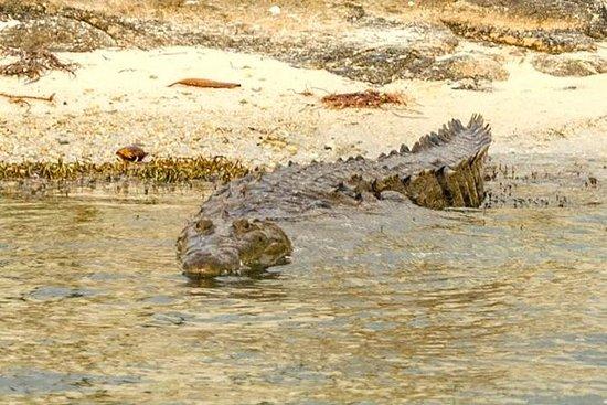 Privat krokodiltur från Riviera Maya