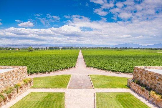 Recorrido vinícola privado en Luján...