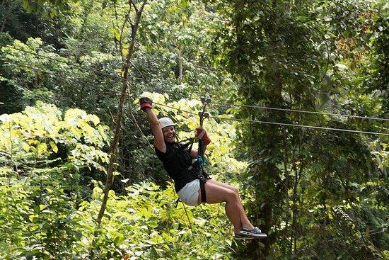 Abenteuerliche Tour in den Baumkronen...