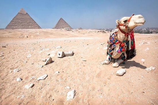 Private Safari: Quad Bike and Camel...