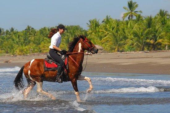 ハコの近くにあるビーチ乗馬アドベンチャー