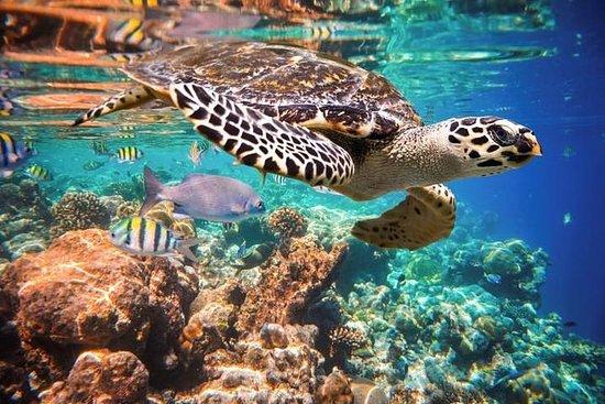 Excursão em Tulum para nadar com as...