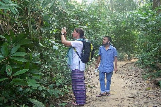 Private Tour: Sreemangal Day Tour of...